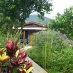 le bungalow et son jardin