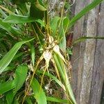 orchidée à la ferme Gavilan