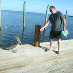 "feeding ""rufus"" on the dock"