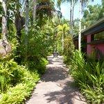 Paradise walk