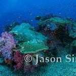 Fiji reef