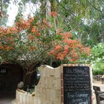 Beautiful bougainvillea in flower at the gate