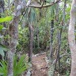 trail thru bush habitat