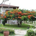 Giardino, albero Jacaranda