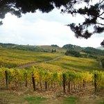 Autumn in Chianti.