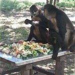 Spider monkeys