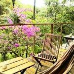 Vista desde el bungalow