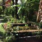 fish pond in the garden