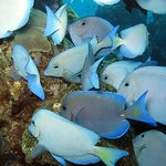 underwater photo in Sosua Bay