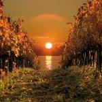 Wineyards in Goriska Brda