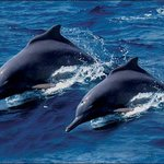 enjoy the natural dolphin watching