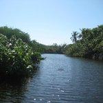 Mangroves and Crocs at Mazunte 70 minutes away