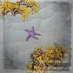 Starfish on Parksville Beach