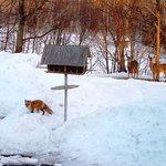 Fox and Deer