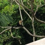 Monkey playing in trees in front of house