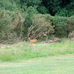 A different type of hazard on the fourth fairway