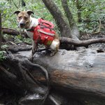 Our Outdoor Adventure dog :)