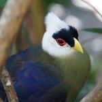Such a pretty bird!