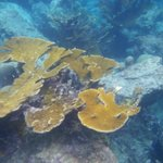 Under water @ Sunscape
