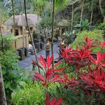 lush bensley garden