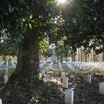 magnolia sunlight