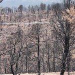 More Burnt Trees