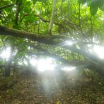 bush walk around the island