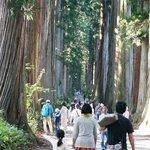 圧巻の杉並木の参道
