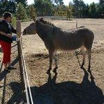 Zonkey!!!! @ Seein' Spots Farm