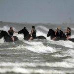 zwemmen met Friese paarden