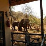 Naast het huisje staan de olifanten te eten