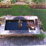 Part of hotel garden