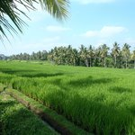 regular stops along rice paddies, just amazing
