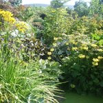 Luscious borders filled with stock plants