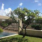 Jardin y piscina privada