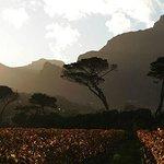 Vista dos vinhedos de Groot Constantia