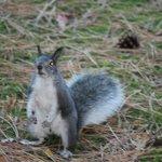 Local squirrels