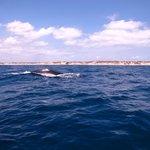 humpback whale GS