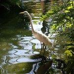 Reiher im Teich vor Buffetrestaurant