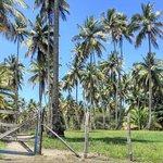 Trilha para Praia de Moreré