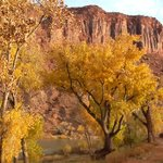 View: Colorado River from Red Cliffs Lodge Cabin