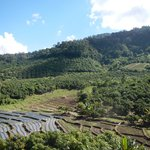 View of the coffee plantation