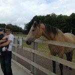 The resident horse loves apples