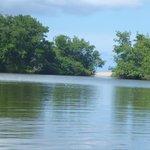 la mangrove séparée de la mer par une petite bande de sable.