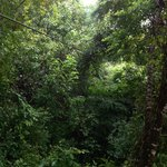 El Canopy y el bosque.