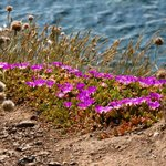 Cliff top plants