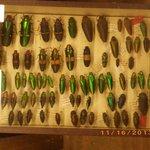 insetos