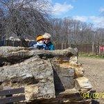 A really big log