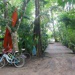 Entrada y Salida hacia la Playa, un puente de madera tan solo nos separa de las playas