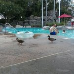 It was fun to see ducks hangin' out at the pool